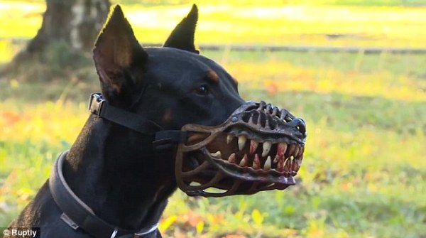The new accessory is designed to protect owners from would-be attackers during late walks with their dog in the park Read more: http://www.dailymail.co.uk/news/article-3216861/Terrifying-muzzle-designed-dog-owners-safe-night-transform-pooch-menacing-WEREWOLF.html#ixzz3kQPpFEMI  Follow us: @MailOnline on Twitter | DailyMail on Facebook