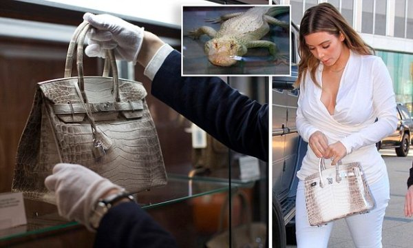 An employee places an Hermes diamond and Himalayan Nilo Crocodile Birkin handbag in a case at Heritage Auctions offices in Beverly Hills, California September 22, 2014. The handbag has 242 diamonds with a total of 9.84 carats.  REUTERS/Mario Anzuoni  (UNITED STATES - Tags: ENTERTAINMENT SOCIETY)